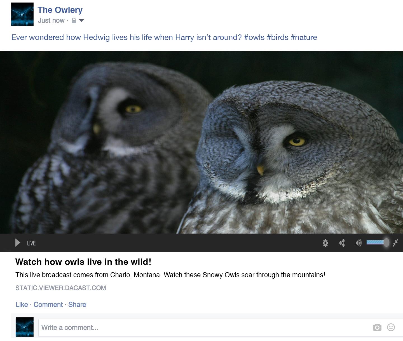 embed live video on facebook